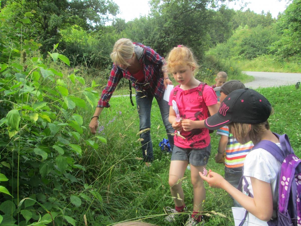Wiesenkräuter riechen, fühlen und schmecken bei der Kräuterwanderung.
