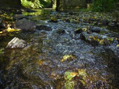 Waterpad Orke Medelon