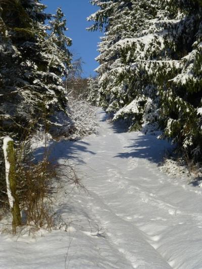 Winterwandelroute Faust / Weddel (Wandelrondweg 1) Medebach