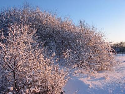 Winterwandelen in Titmaringhausen